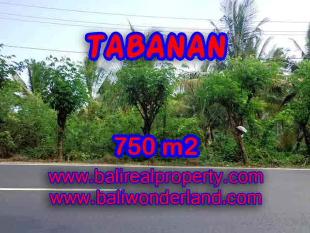 Extraordinary Land for sale in Tabanan Bali, Rice fields and ocean view in Tabanan selemadeg– TJTB138