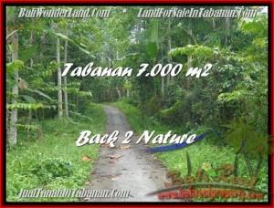 Magnificent PROPERTY 7.000 m2 LAND FOR SALE IN Tabanan Penebel TJTB176