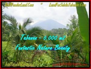 Beautiful TABANAN BALI 6.000 m2 LAND FOR SALE TJTB182