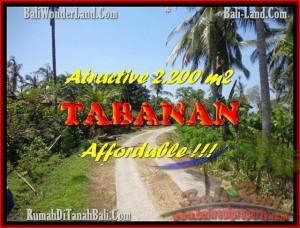 FOR SALE 2.200 m2 LAND IN TABANAN TJTB169