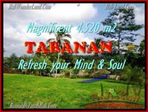 FOR SALE Affordable PROPERTY LAND IN Tabanan Selemadeg BALI TJTB154