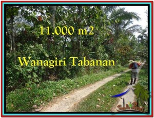 FOR SALE Affordable PROPERTY LAND IN Tabanan Selemadeg BALI TJTB213
