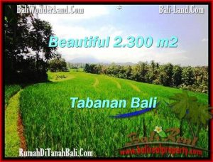Magnificent PROPERTY Tabanan Selemadeg 2,300 m2 LAND FOR SALE TJTB209