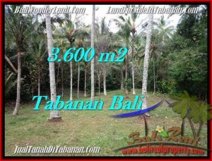 Magnificent LAND FOR SALE IN TABANAN TJTB211