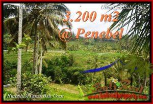 Affordable PROPERTY 3,200 m2 LAND IN Tabanan Jatiluwih FOR SALE TJTB216