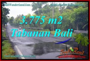 Magnificent 3,775 m2 LAND FOR SALE IN TABANAN BALI TJTB271