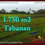 Beautiful 1,750 m2 LAND IN TABANAN BALI FOR SALE TJTB262