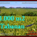 Beautiful PROPERTY 1,000 m2 LAND FOR SALE IN Tabanan Selemadeg TJTB266