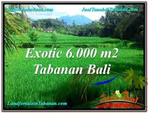 Exotic Tabanan Penebel BALI LAND FOR SALE TJTB306