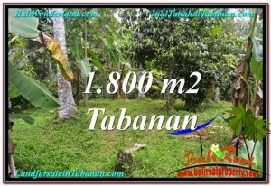 Beautiful PROPERTY 1,800 m2 LAND FOR SALE IN Tabanan Penebel TJTB293