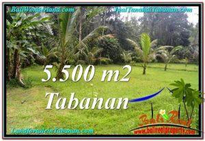 Affordable LAND IN Tabanan Penebel BALI FOR SALE TJTB295